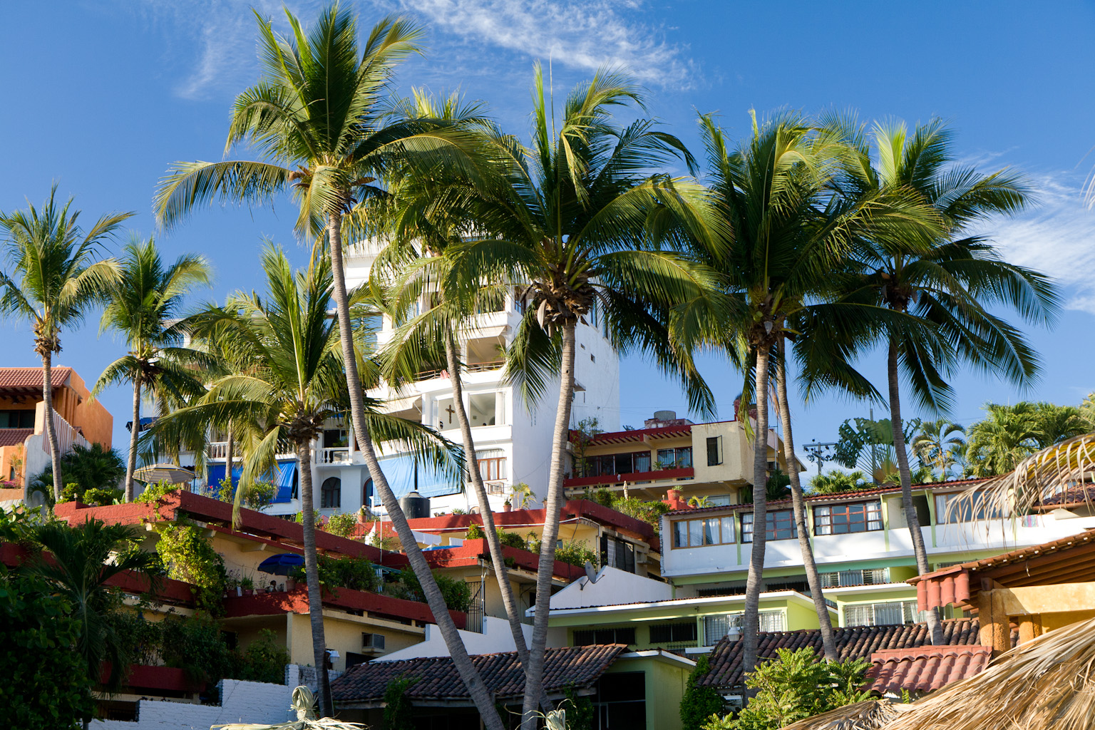 hotel with big coconut tree