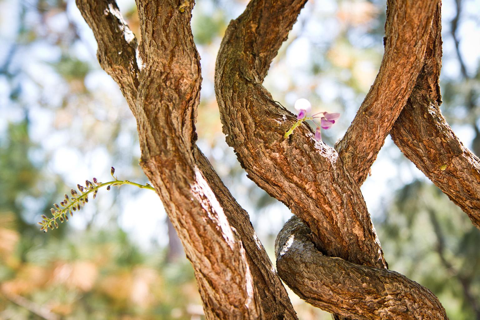 Woven Tree