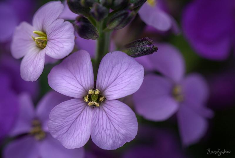 image of final flowers edit