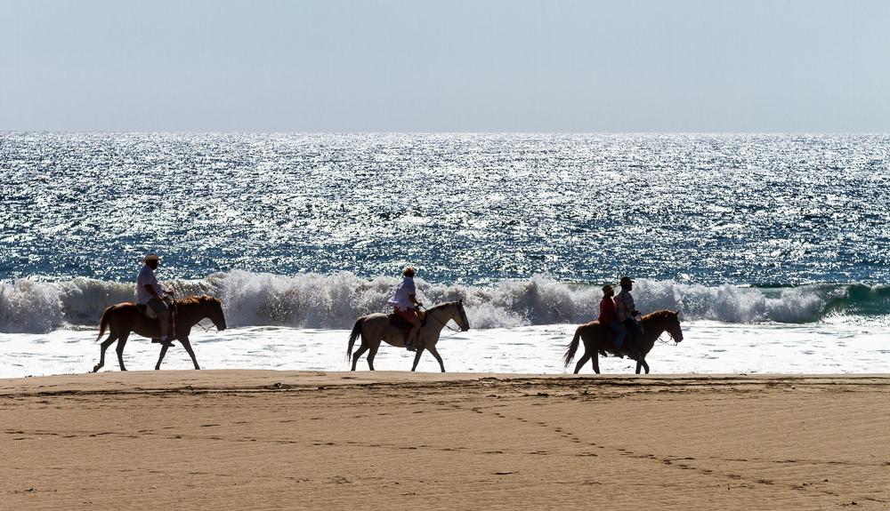 Playa Blanca horses