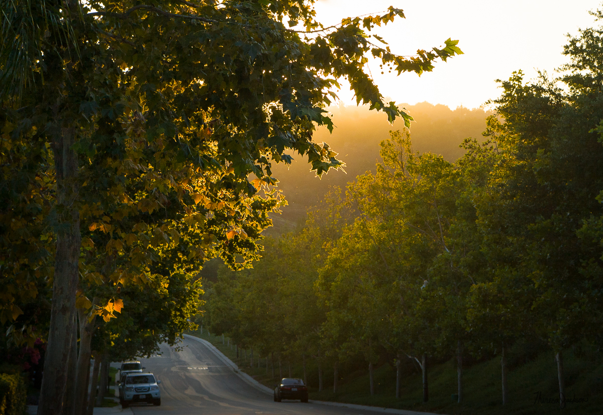 Fall Light in Rancho Sa n Pasqual